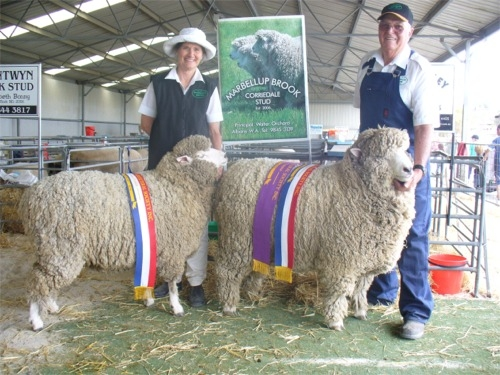 Champion Ewe and Ram - Marbellup Brook Stud
