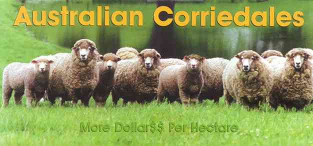 Corriedale Banner